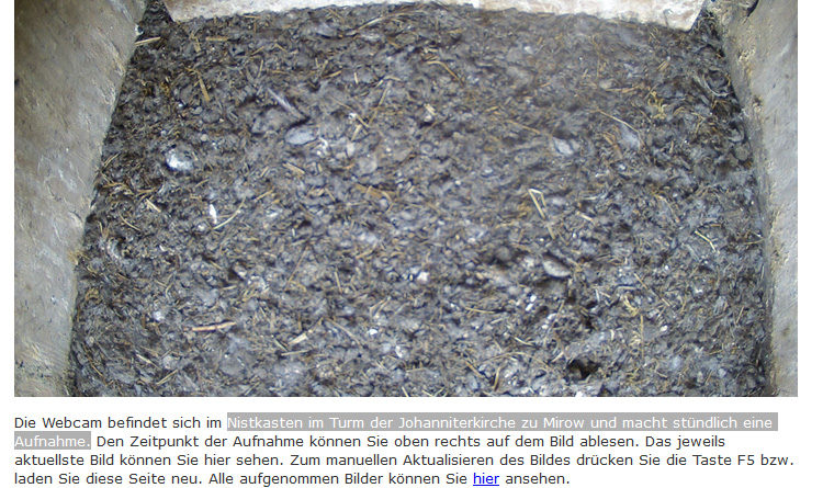 Webcam Turmfalke Nest Kirche Mirow