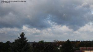 Webcam Storchennest in Ludwigsburg bei Greifswald