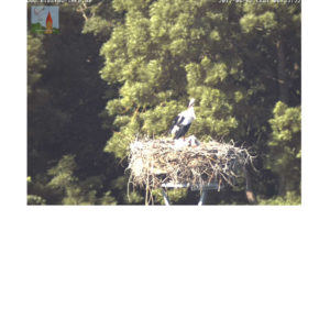 Storchencam Webcam Rostock Bistow Storch Storchennest