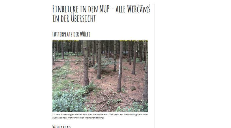 Webcam Güstrow mit 7 Webcams aus dem Wildpark MV, früher Natur- und Umweltpark Grüstrow